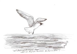 fliegende lachmöwe