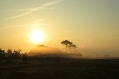 NebelNordenWanderfalke01
