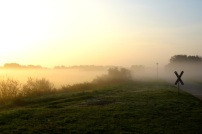NebelNordenWanderfalke03